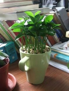 Plant lemon seeds from your lemons!    Cute desk plant idea
