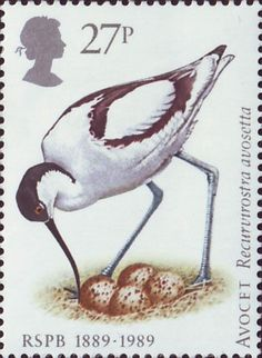 UK, 1989. 27p Stamp honoring the 100th anniversary of the founding of the RSPB - Avocet. The Royal Society for the Protection of Birds is a charitable organisation registered in England, Wales and Scotland. It was founded as the Plumage League in 1889 by Emily Williamson.