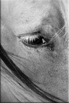 Intimités: # 2 Photographie de Vincent Recordier Poster 40* 60 cm