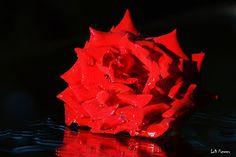 Pulsul orasului: Roses
