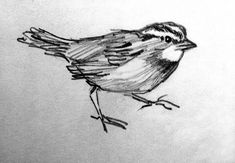 A Sparrow, Pencil Sketch, Sketchbook Pencil Drawing, Bird Sketch, Fine Art Print reproduction,  4.5 x 6.5 with 8 x 10 mat