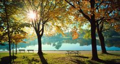 Premium Thick-Wrap Canvas Wall Art Print entitled Park in autumn Fall Pictures, Fall Photos, Quanta Luz, Summer Schedule, Summer Jobs, Camping Places, Lake Geneva, Magazine Articles, Original Song