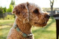 Dog Training Methods, Dog Training Classes, Dog Training Techniques, Low Shedding Dogs, Pancreatitis In Dogs, Cavapoo Dogs, Asian Dogs, Designer Dogs Breeds