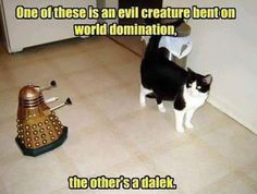 Funny pictures about Such An Evil Creature. Oh, and cool pics about Such An Evil Creature. Also, Such An Evil Creature photos. Funny Pictures For Kids, Funny Kids, Funny Photos, Cute Cat Memes, Funny Memes, Hilarious, Nutrition Education, Cat Love Quotes, Doctor Who Funny