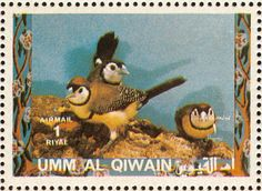 Double-barred Finch stamps - mainly images - gallery format