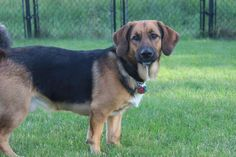 Spaghetti-Adopted 2012-From Animal Rescue League of Iowa www.arl-iowa.org