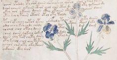 Nová teorie o původu záhadné knihy: Vytvořili Vojničův rukopis Aztékové?