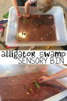 A is for Alligator and alligators live in swamps! This sensory bin was so much f. Reptiles A ist f