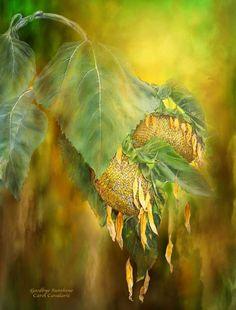 Goodbye Sunshine by Carol Cavalaris