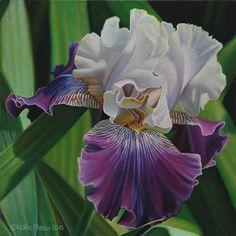 Leslie Macon — Iris  (548x550)