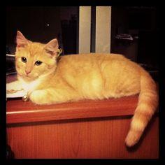 My Osmo cat
