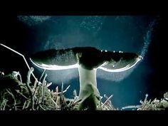 Spore Rain (mushrooms reproduction) - YouTube