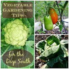 Greneaux Gardens: Vegetable Gardening Tips for the Deep South Because gardening in the south has its own set of rules...Zones 8-10, this is for you!