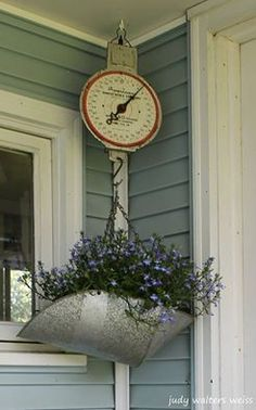 My old scale planted with Lobelia, hanging on my Potting Shed porch ~
