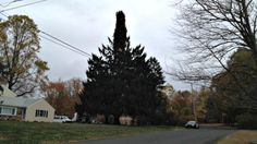 NYC's Rockefeller Center Christmas Tree Hails from Shelton, Connecticut