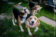 Rescued (legally) from experimentation lab, these beagles finally meet nice humans & get to see the sky for the first time.