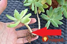Define Propagation: What Is Plant Propagation (and how to get started) Flower Pots, Flowers, Growing Plants, Plant Propagation, House Plants, Decor, Decoration, Container Plants, Decorating
