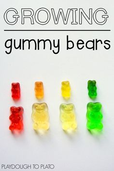Growing Gummy Bears. Super cool (and easy!) science for kids.                                                                                                                                                                                 Mais