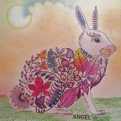 Johanna Basford Adult Coloring Colouring Hare Enchanted Bunnies In Nice Meeting You Rabbits Bunny Rabbit