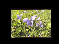 Spring is Completeness  Photo Block  by SideStoriesStudios on Etsy