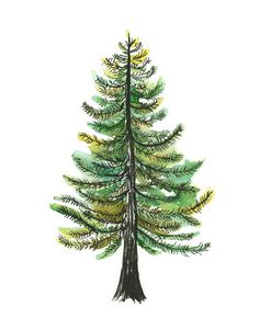 Watercolor Evergreen Tree Art Print  painting by courtneyoquist