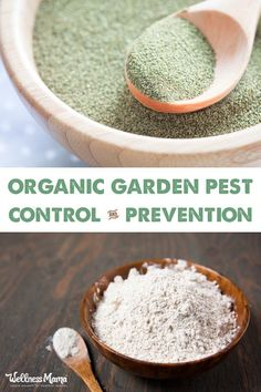 Preventing bugs, insects, and other pests in an organic garden is a chore. Here's some natural ways to help keep them at bay.