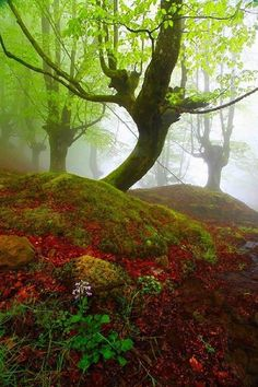 Misty forest, Gorbea Natural Park in the Basque Country, Spain