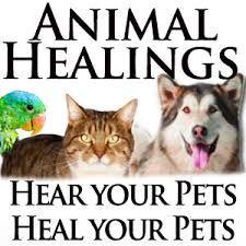 Image result for reiki healing pets