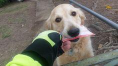Pippa hat Post.