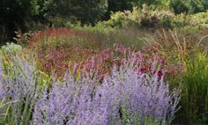 Storchschnabel und andere Stauden: Gräser und ihre Verwendung (2/3) - The RHS Garden Wisley