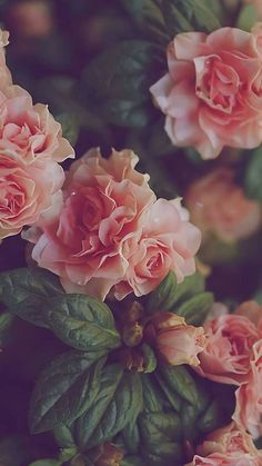 we do not forget { the North Remembers } Flower Background Wallpaper, Flower Phone Wallpaper, Cute Wallpaper Backgrounds, Pretty Wallpapers, Flower Backgrounds, Aesthetic Iphone Wallpaper, Aesthetic Wallpapers, Beautiful Nature Wallpaper, Flower Aesthetic