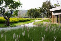 """""""An inspiring use of grasses at 23̊ Estate, by Shma CO, in Khao Yai, Nakornratchsima, Thailand"""" The LA Team  www.landarchs.com"""