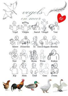 Gebarentaal: Vogels en meer Tarot, Learn Dutch, Baby Sign Language, Love Signs, Speech Therapy, Activities For Kids, Babies, Fun, School