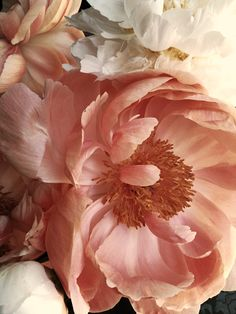 Rebel In A New Dress flowers pastel Pastel Flowers, My Flower, Beautiful Flowers, Cactus Flower, Exotic Flowers, Pastel Pink, Poppy Photography, Photography Flowers, Peach Palette