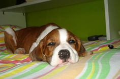 My dog when she was a puppy