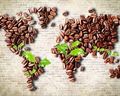 Coffee Wallpaper http://www.wallpaperfx.com/other/miscellaneous/coffee-beans-world-map-wallpaper-13258.htm