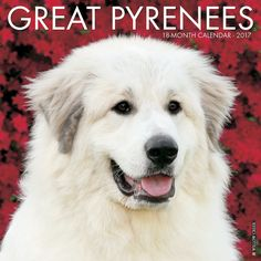 Just Great Pyrenees 2017 Calendar - will ship in July 2016