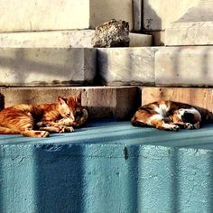 Cats hanging out on the streets of Old San Juan Puerto Rico