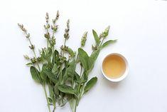 Šalvěj je známá léčivka už z dob starých Římanů Plants, Plant, Planets