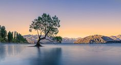 That Wanaka Tree - This is supposedly the most photographed tree in New Zealand and I'm not surprised; when I arrived in the evening there were already 6 other photographers there set up waiting for the sunsent. More arrived after me and at midnight there were still at least six snapping away.