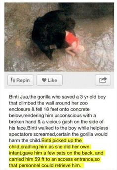 Funny pictures about Faith In Gorillas Restored. Oh, and cool pics about Faith In Gorillas Restored. Also, Faith In Gorillas Restored photos. Sweet Stories, Cute Stories, Awesome Stories, Beautiful Stories, Beautiful Creatures, Animals Beautiful, Funny Animals, Cute Animals, Smart Animals