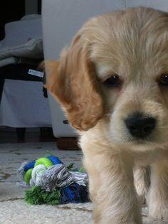 Louis Dogs, Animals, Animales, Animaux, Doggies, Animal, Animais, Dieren, Pet Dogs