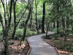 제주는 요즘 숲길이 많은 인기를 얻고 있다.제주하면 바다만 떠올릴 수 있지만제주에는 정말 깨끗하고 예쁜... Sidewalk, Country Roads, Side Walkway, Sidewalks, Pavement, Walkways
