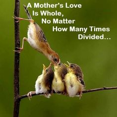 Mothers love.