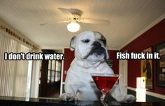 I don't drink water. of drink water water aes… - drinkwater Funny Dogs, Funny Animals, Cute Animals, Baby Animals, Friday Funny Pictures, Hilarious Photos, Dump A Day, Demotivational Posters, Drinking Water