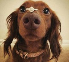 A dog person could definitely relate to this! Who wish their pets to take part during the proposal? Tag your dog lover friends! Photography by via Memorable Proposal Ideas, Proposal Photos, Proposal Photography, Perfect Proposal, Wedding Photography, Puppy Proposal, On Your Wedding Day, Dream Wedding, Dog Wedding