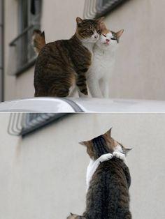 #CAT##CUT##PETS#
