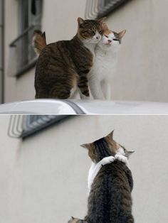 Wow...even cats have a better love life than I.