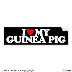 I LOVE MY GUINEA PIG CAR BUMPER STICKER
