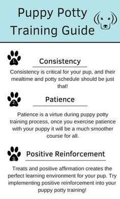 Easy Tips On How To Train A Puppy To Pee Outside Easy Tips On How